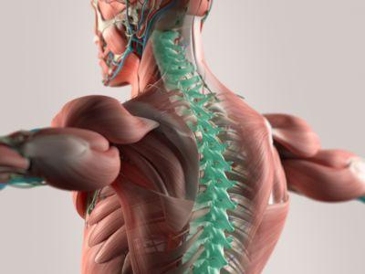 Que proporción del sistema nervioso puede sentir el dolor