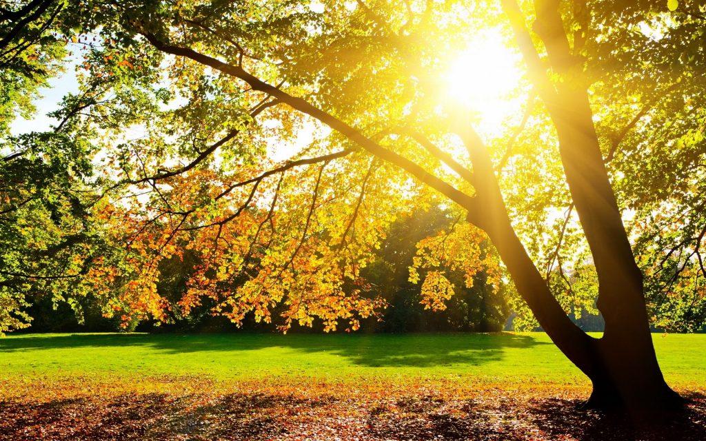 luz del día o luz interna